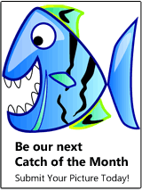graphic colorful fish with big teeth and text Be the next catch of the month, send us your pictures