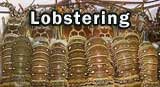 A row of live Spiny Lobsters announcing Lobster Season