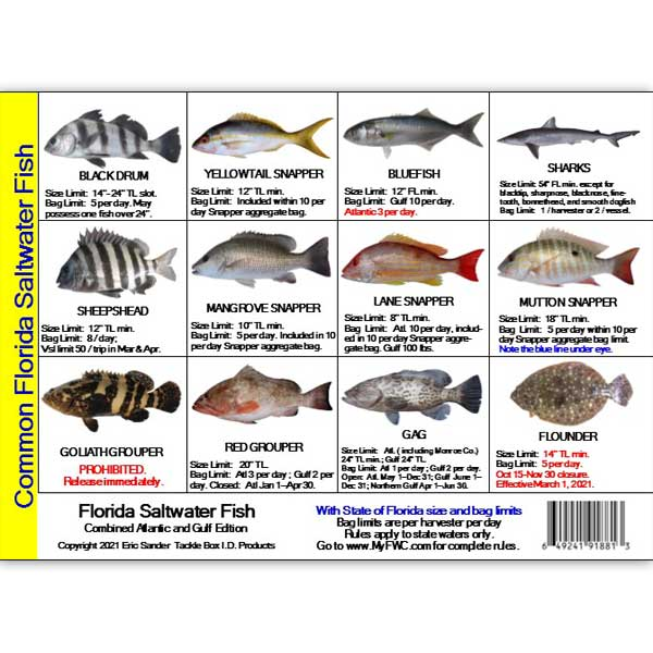 card-tb-fish-sm-fl Fishing Go New Card Adventures Here 99 America Regulations Store Diving 3 And - Florida Start Mini Online