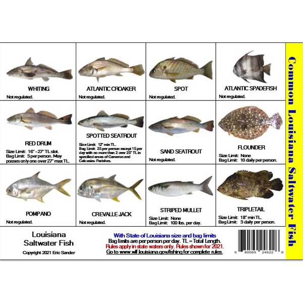 Fishing Regulations Mini Card Louisiana Card Tb Fish Sm La 6 99 America Go Fishing Online Store New Fishing And Diving Adventures Start Here